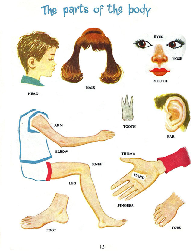 части тела для детей картинки